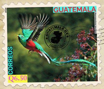 Quetzal-Ave-Nacional-de-Guatemala